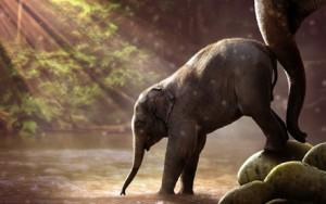 Photo of Elephant by Jonny Lindner on Pixabay